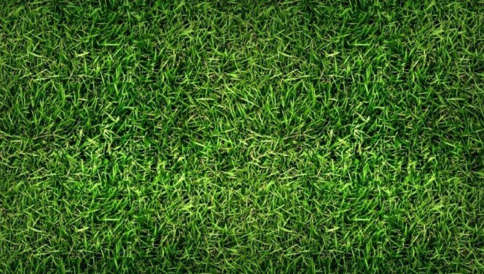Rüyada çimen görmek: Rüya Tabirleri Yorumları