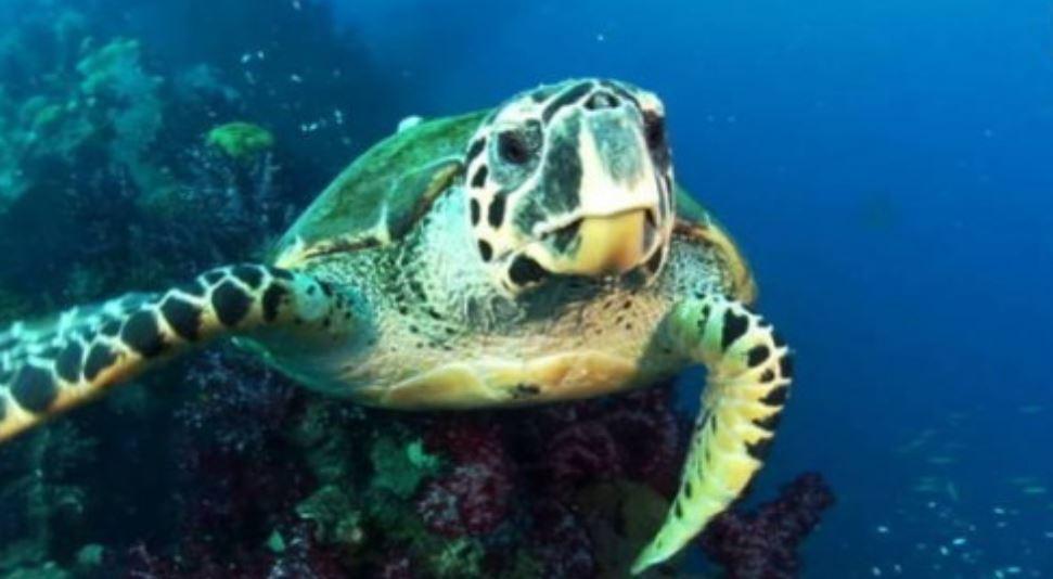 Rüyada kaplumbağa görmek: Rüya Tabirleri Yorumları