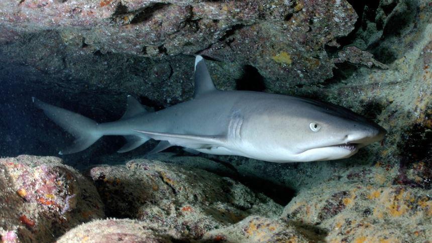 Rüyada köpek balığı: Rüya Tabirleri Yorumları