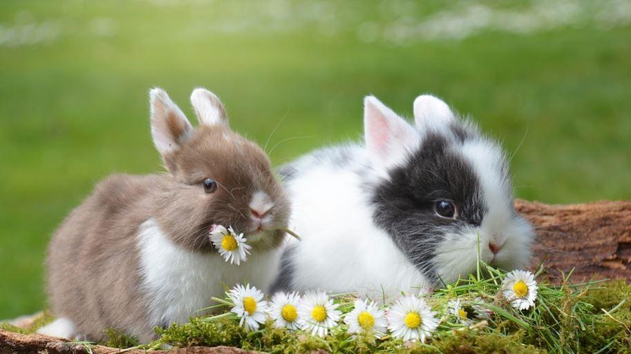 Rüyada tavşan görmek: Rüya Tabirleri Yorumları