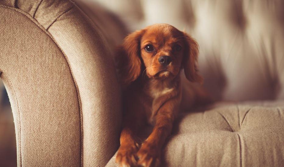Rüyada köpek yavrusu görmek: Rüya Tabirleri Yorumları