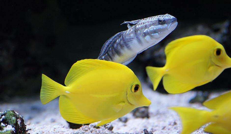 Rüyada balık görmek: Rüya Tabirleri Yorumları