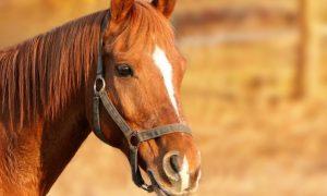 Ruyada at görmek ne demek? Rüya Tabirleri Yorumları