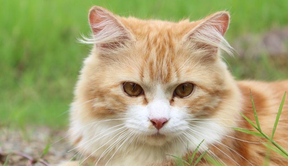Rüyada Kedi Görmek Ne Anlama Gelir? Rüya Tabirleri Yorumları
