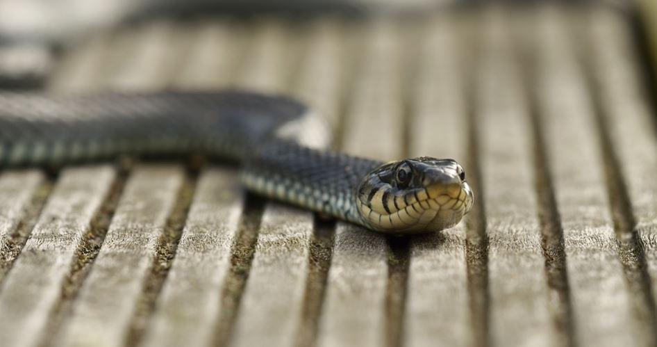 Rüyada yılan ısırması: Rüya Tabirleri Yorumları