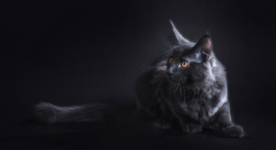Rüyada kara kedi görmek: Rüya Tabirleri Yorumları
